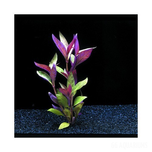 Aqua-decor-7-artfcl-purple-green-flwr