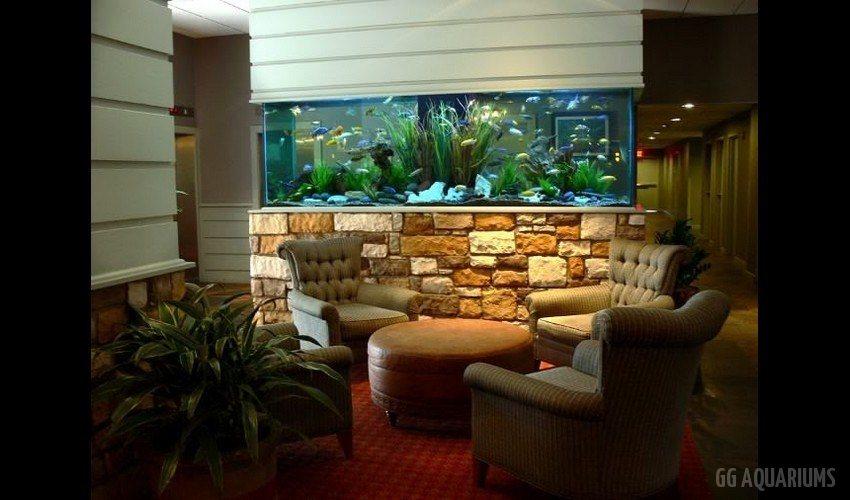 GG - Commercial Aquarium  1