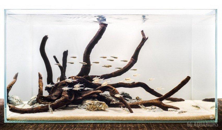 GG - Commercial Aquarium  3