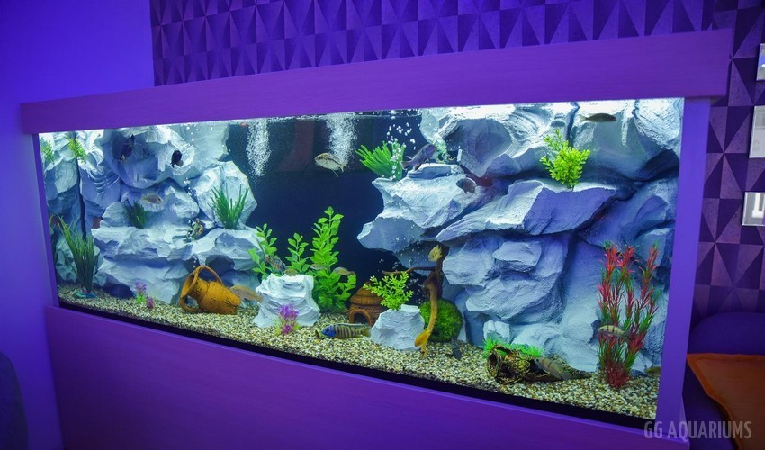 GG  -  Commercial Aquarium  4