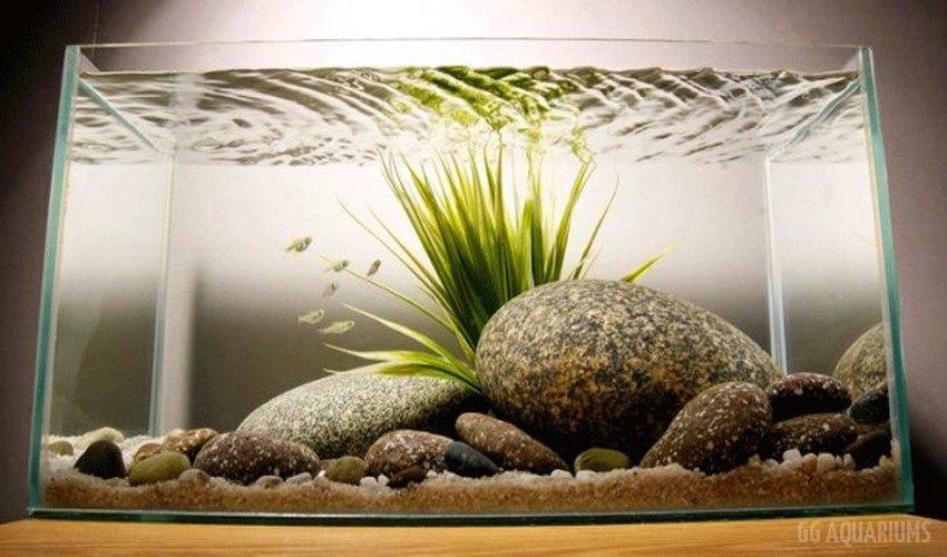 GG - Commercial Aquarium  5