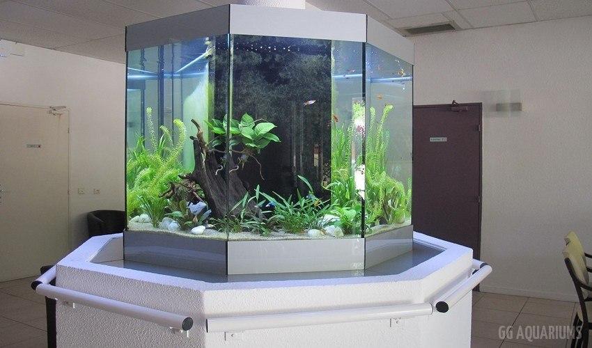 GG - Commercial Aquarium  6