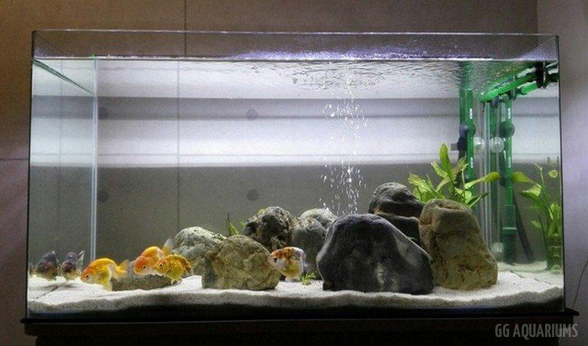 GG - Commercial Aquarium  7