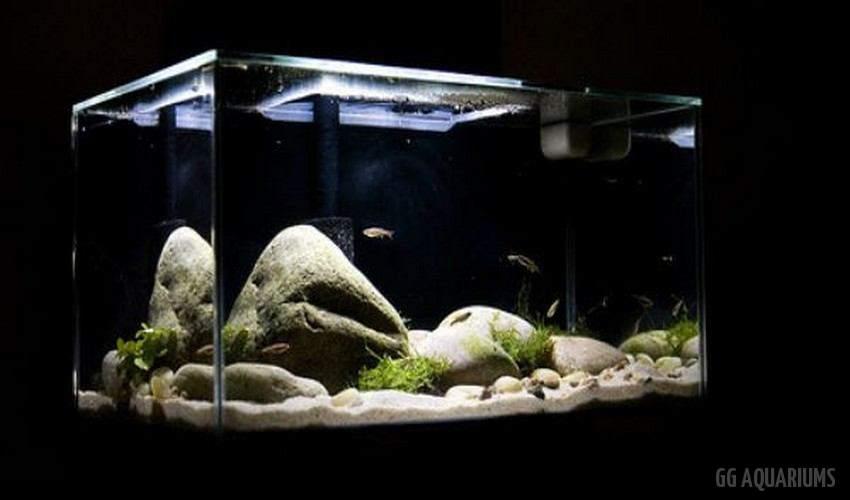 GG - Commercial Aquarium  8