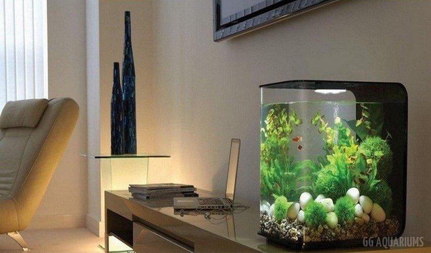 GG - Commercial Aquarium  9