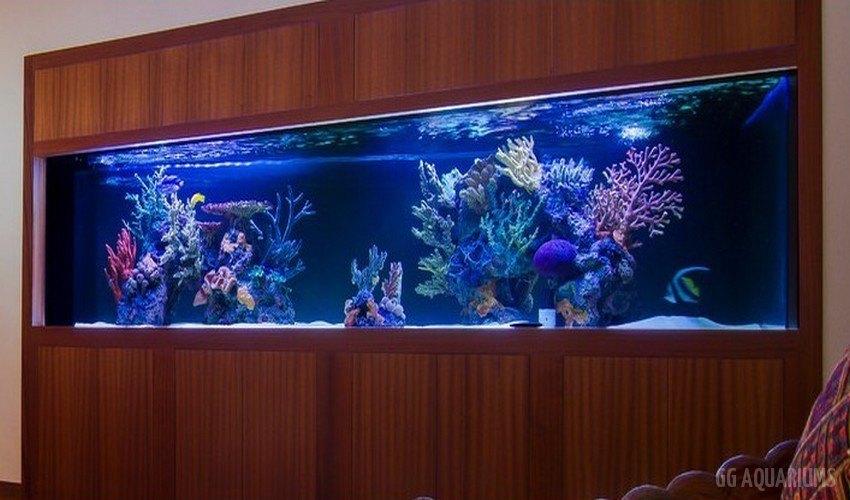 GG - Commercial Aquarium  10