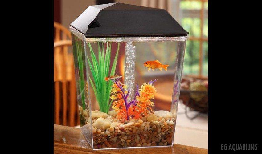 GG - Nano Aquarium  15