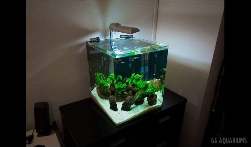 GG - Nano Aquarium  16