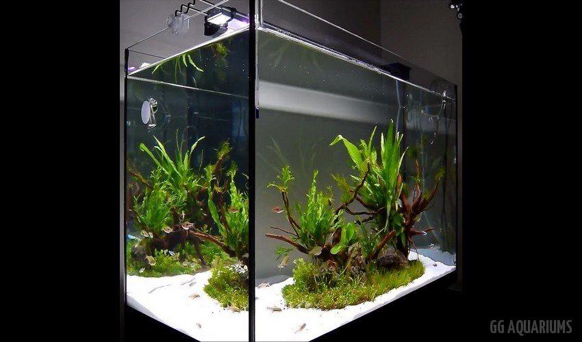 GG - Commercial Aquarium  26