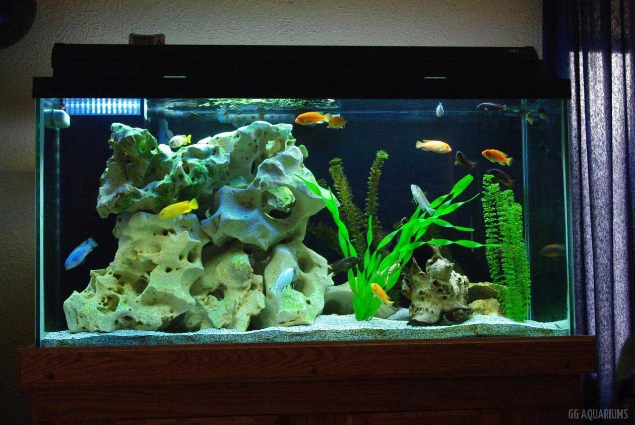 GG - Residential Aquarium  29