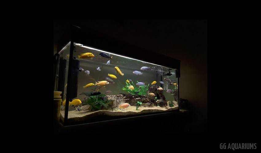 GG - Residential Aquarium  19