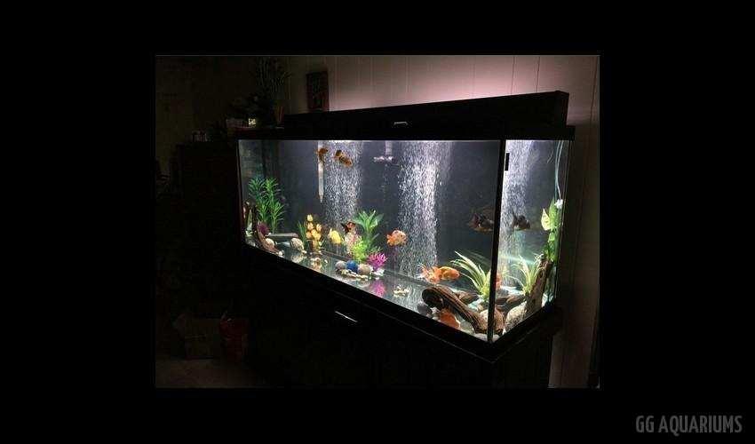 GG - Residential Aquarium  20