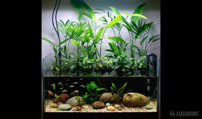 GG - Residential Aquarium  21