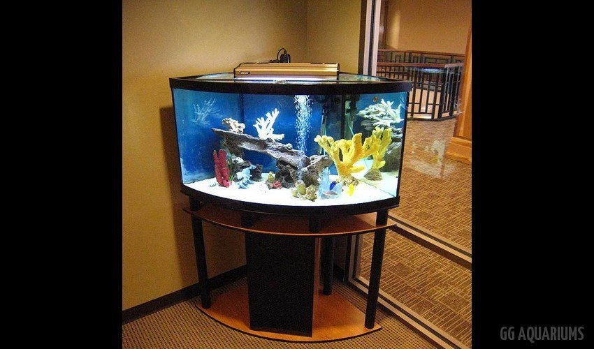 GG - Residential Aquarium  24
