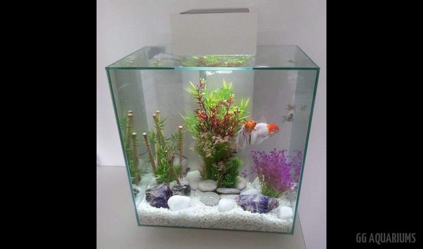 GG - Nano Aquarium  31