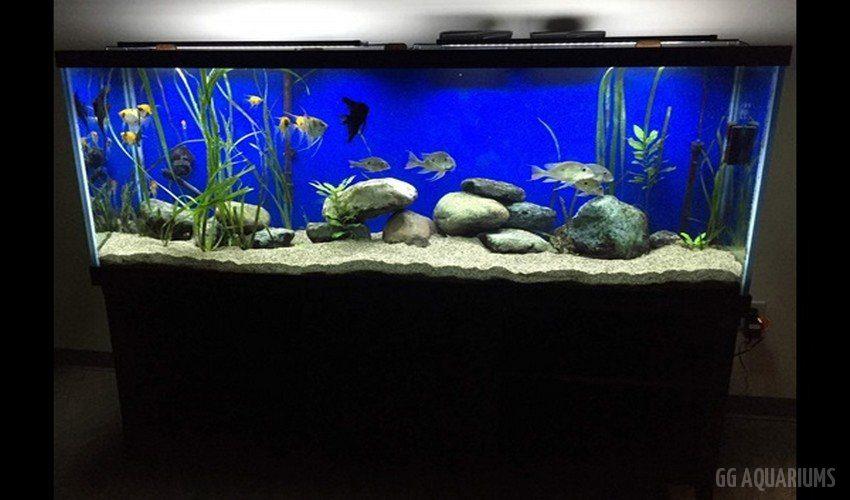GG - Residential Aquarium  32