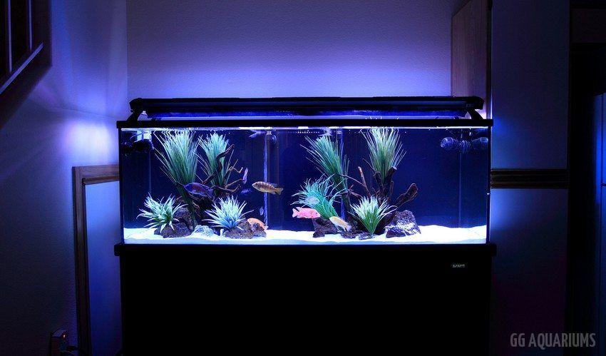 GG - Residential Aquarium  33