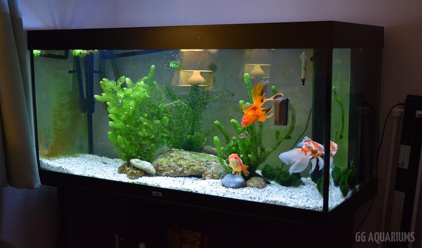 GG - Residential Aquarium  37
