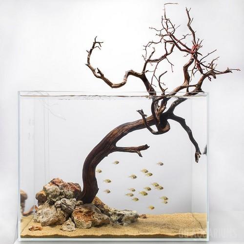 Driftwood Aquascape - 1