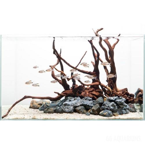 Driftwood Aquascape - 2