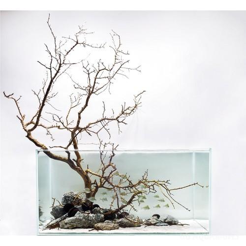 Driftwood Aquascape - 3