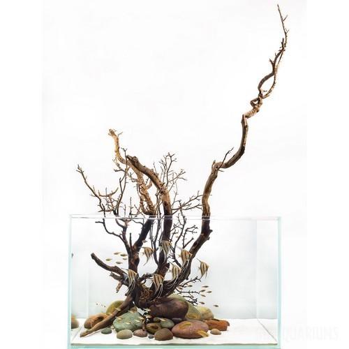 Driftwood Aquascape - 4